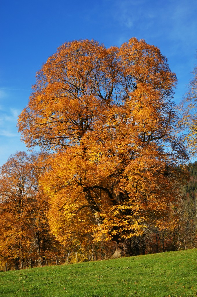 Herbstbilder in der Ebene vor Lenggries