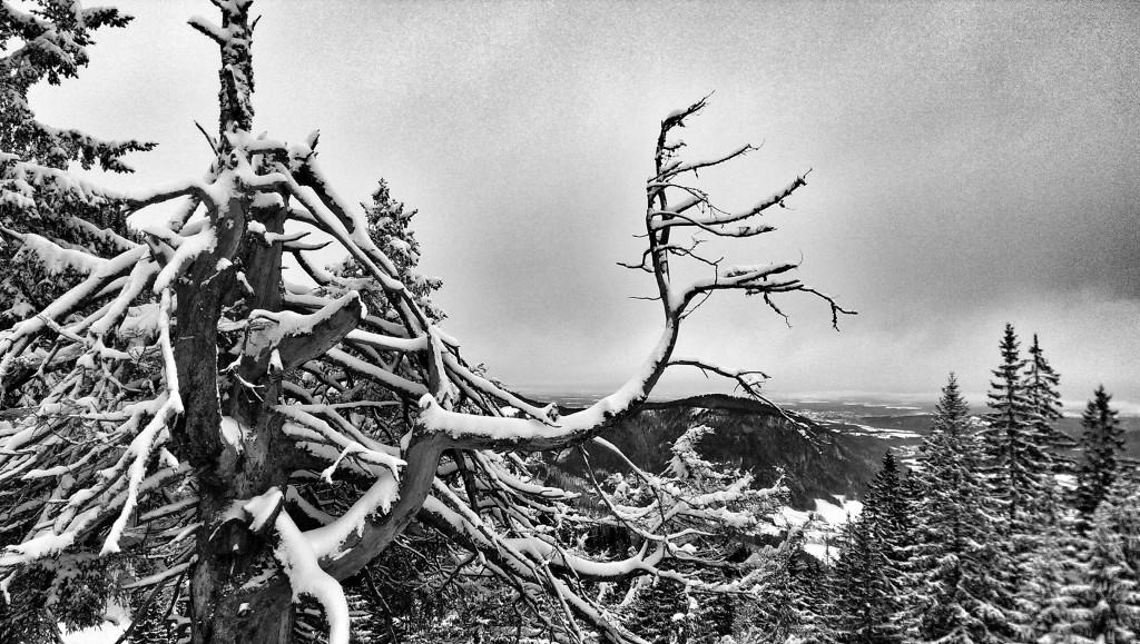 26.12.: 1425m hoch am Unternberg in den Chiemgauer Alpen und trotzdem kaum Schnee