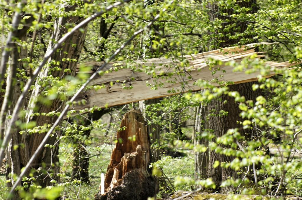 100 Bäume im Park wurden Opfer von Sturm Niklas.