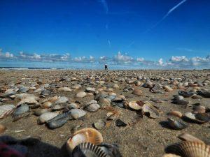 Baltrum Nordsee Strand