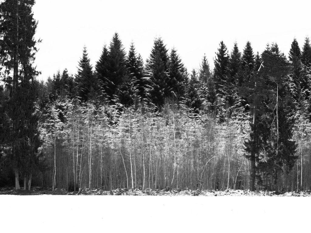 Birkenhain im Moos an einem trüben, kontrastarmen Adventsnachmittag mit dem 75mm Objektiv von Olympus.