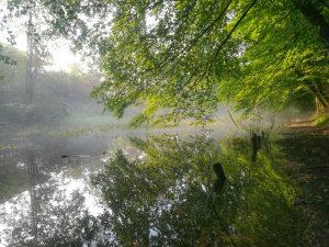Altwasser der Traun beim Morgenlauf um halb Acht.