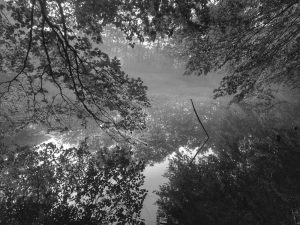 Altwasser parallel zur Traun.