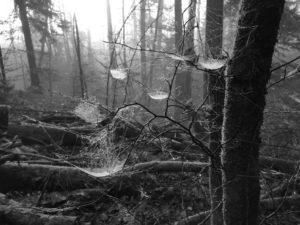 Wichtel Hägematten im Bürgerwald Traunstein